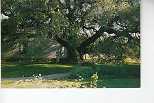 Old Oak Tree Rio Frio Texas TX