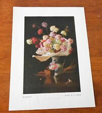 VINTAGE PRINT ALICE M. E. BALE 'SCABIOSA' FROM NATIONAL GALLERY VIC C1950s