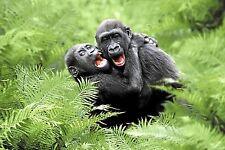 Ansichtskarte: spielende Gorilla - Kinder - playing gorilla babys