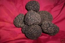 300g 10.6 oz FRESH WINTER TRUFFLE wild italian TOP QUALITY + coupon 10% discount