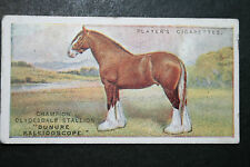CLYDESDALE DRAUGHT HORSE  Stallion   Vintage 1915 Card  # VGC