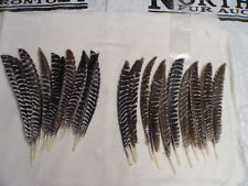 24 (2 Doz.) Small Barred Turkey Pointers Feather Fly Tying Crafts Arrows #924