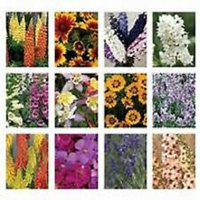 LOT OF 10 MIXED PERENNIAL GARDEN PLANTS IN 1lt POT'S, HARDY COTTAGE GARDEN MIX
