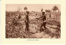 Heliogravüre, Photogravur, 290 x 200 mm, kartonart. Papier, Maniok, Afrika, 1935