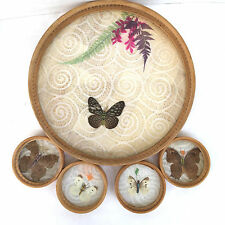Tundra Bamboo Serving Tray Pressed Butterflies Four Matching Coasters