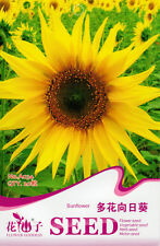 20 Original Package Seeds Sunflower Seeds Helianthus Annus Sun Flower A034
