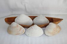 Large Clam Shells Seashells from the Jersey Shore, lot of 5