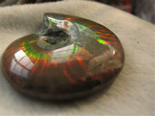 69g  RAINBOW!!! TOP NATURAL Iridescent Ammonite Fossil FROM Madagascar