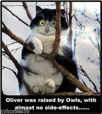 Funny Cat Humor Oliver Was Raised By Owls Refrigerator Magnet
