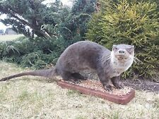"River Otter Life-Size, ""Taxidermy"" and ""Cabin Decor"""