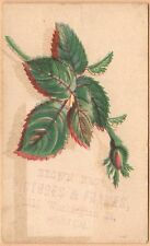 Small Victorian Trade Card-Brown Bros Pictures & Frames-Boston, MA-Rosebud