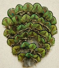 ONE PEACOCK FEATHER PAD - Green/Gold Gorgeous Pad; Headband/Bridal/Burlesque