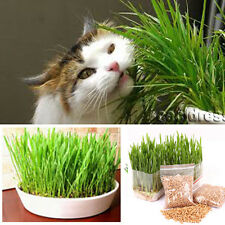 New harvested cat grass 1oz/approx700 seeds 100% organic including growing guide