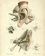 Vintage Ear Medical Anatomy Hospital Chart Illustration Canvas Art Print New