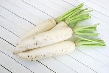 ์Best SEEDS  With Winter White Radish  Daikon Japanese Chinese Radish 600 Seeds