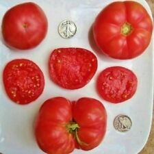 Fordhook First - Organic Heirloom Tomato Seeds - Top Quality Slicer - 40 Seeds