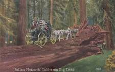 Antique POSTCARD c1907-20 Fallen Monarch California Big Trees Unused 14679