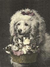 POODLE CHARMING DOG GREETINGS NOTE CARD BEAUTIFUL DOG CARRIES BASKET OF KITTENS