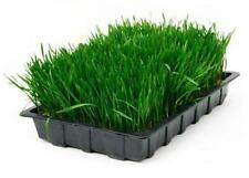 1 Kg Organic Wheatgrass Seeds 100% British Farm Excellent Sprouting Free UK P&P
