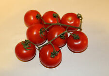 Campari tomato seeds - Great taste - Comb. S/H! See our store!