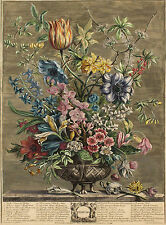 1730 | Robert Furber | FEBRUARY | original hand-col flower engraving | CASTEELS