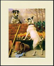 SMOOTH FOX JACK RUSSELL TERRIER DOGS LOVELY DOG PRINT MOUNTED READY TO FRAME