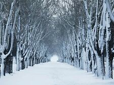 ART PRINT POSTER PHOTO LANDSCAPE WINTER FOREST TREE TUNNEL COLD SNOW LFMP1235