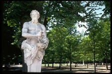 Statue masculine 346020 avec raisins VERSAILLES FRANCE A4 papier photo