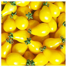 Tomato Seeds 30 Seeds Yellow Lycopersicon Esculentum Vegetable Fruit Seeds B038