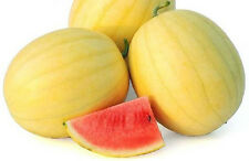 A 0.5g (approx. 8) exotic watermelon seeds ZLOTO WOLICY extremely rare vareity