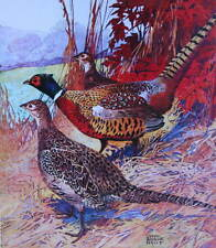 vintage art Lynn Bogue Hunt Ring-necked Pheasant