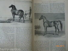 The Horse Ancient & Modern Rare Old Victorian Antique Illustrated Article 1884
