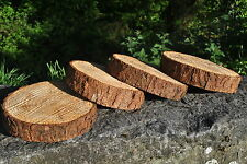 x5 TREE SLICE LARCH 20-25cm Craft Wood Log Blanks Wedding Display 3-5cm slices