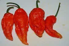 Ghost Chilli-Bhut Jolokia Seeds-A Natural And Heathy Catabolic Stimulant