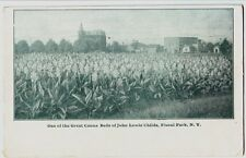 c1910 FLORAL PARK New York NY Postcard GREAT CANNA BEDS John Lewis Childs Town