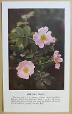 circa 50's / 60's Collectors Card - Cassell's Nature Cards Series A # 19