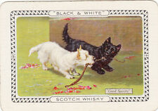 1 single wide vintage playing swap card Dog - Adv  - Black & White Scotch Whisky