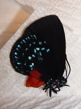 UNMOUNTED BUTTERFLY! FEMALE ATALA !EX-PUPAE! A-1! WOW!
