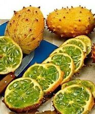 Kiwano seeds (Cucumis metuliferus) Jelly Melon - Feast for your taste buds:)