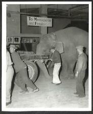 RINGLING BROS BARNUM & BAILEY CIRCUS ELEPHANT TRUCK BLACK NEGRO PHOTO (148)