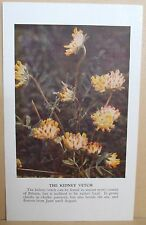 circa 50's / 60's Collectors Card - Cassell's Nature Cards Series A # 33