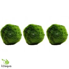 3 x Large Marimo Moss Balls live aquarium plants java shrimps fish nano tank UK