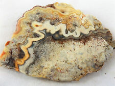DIG-N-UTAH: SLAB CRAZY LACE AGATE ROUGH CAB OLD STOCK  #H 326