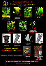 Aquarium Supplies + Live Aquarium Plants - Amazon Sword, Java Fern, Anubias