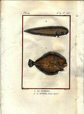 Stampa antica pesci PESCE ROMBO e ACHIRUS 1790 Old antique print fishes