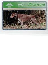 BT Phonecard - Gundogs (8) - German Short Haired Pointer