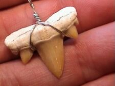 Taxidermy vampire Real Shark Tooth Whale Fossil unique costume prop fang Pendant