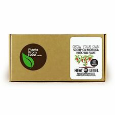 Grow Your Own Scorpion Moruga Chilli Mini Plant Kit