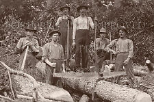 Timber cutters & log rollers c1910 photo logging CHOICES 5x7 or request 8x10 or