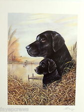 BLACK LAB DOG  PICTURE LABRADOR RETRIEVER PUPPY MALLARD DUCKS  PRINT ONLY 16X20